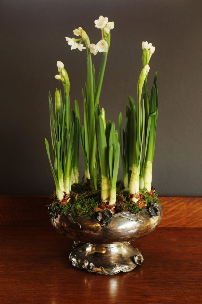 Paperwhites in a vintage silver bowl