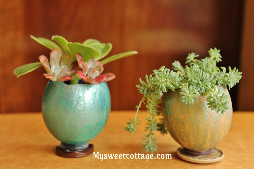 DIY Easter Decor: Egg Shell Planters and Vases, step 6: planting the tiny plants